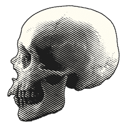 Scary halloween illustration skull