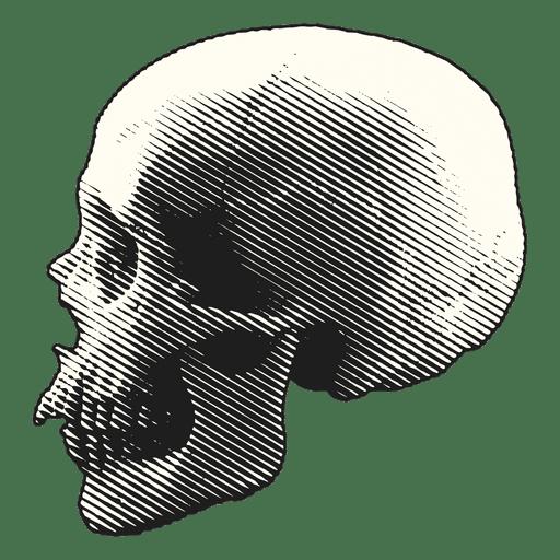 Download Vector Skull With Scary Teeth Vector Image Vectorpicker