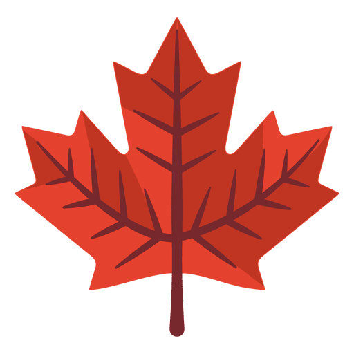 Maple leaf illustration  Transparent PNG