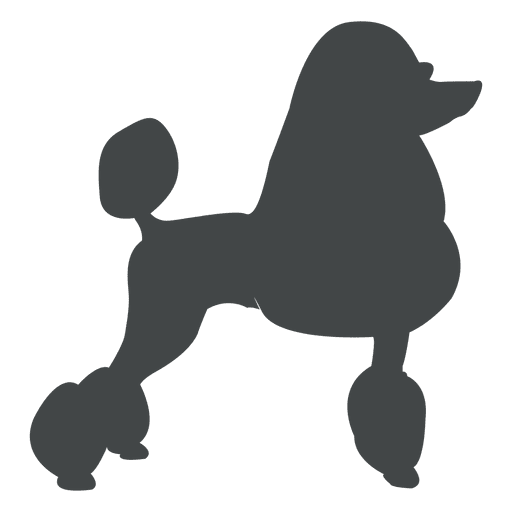 Poodle silhouette posing