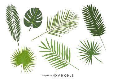 Conjunto de hojas de palmera