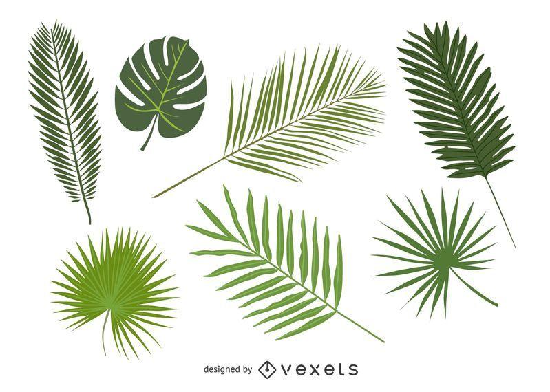 Set of palm tree leaves