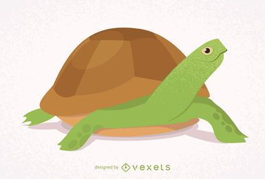 Illustrated and isolated turtle
