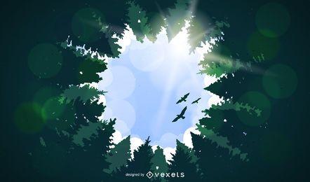 Paisaje forestal con árboles altos.