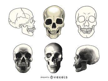 Conjunto de ilustraciones de cráneo humano