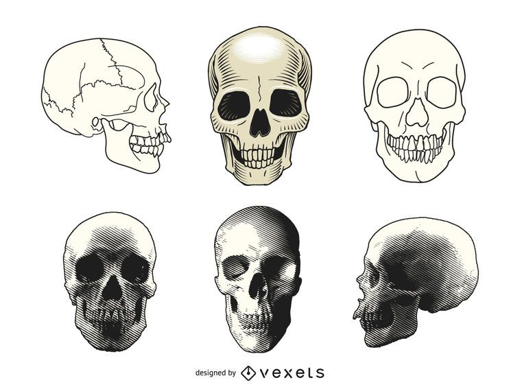 Set of human skull illustrations