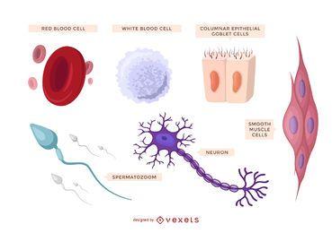 Conjunto de células humanas ilustradas.