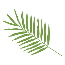 Areca palm leaf illustration