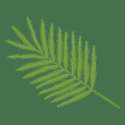 Ilustração da folha de palmeira Areca