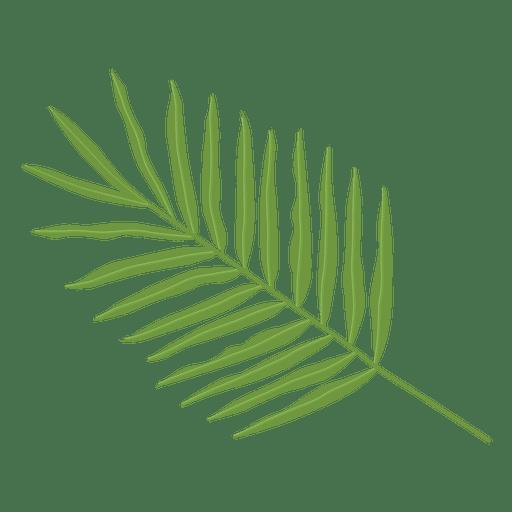 Areca palm leaf illustration