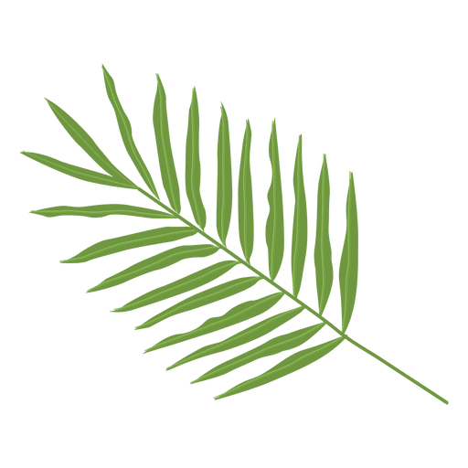 Ilustração de folha de palmeira areca Transparent PNG