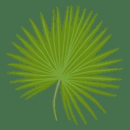 Ilustración de hoja de palmito enano