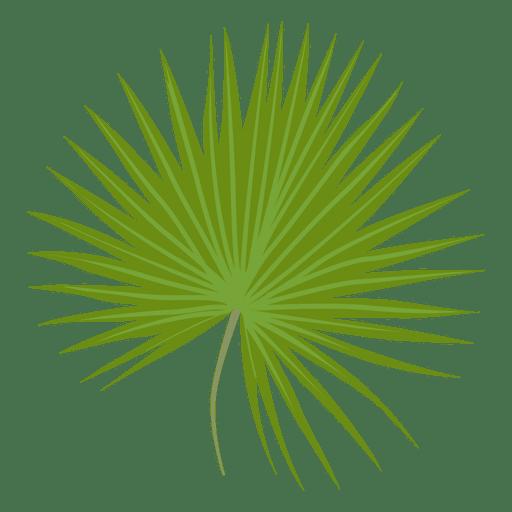Ilustración de hoja de palmito enano Transparent PNG