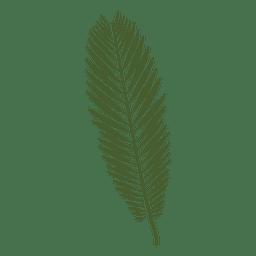 Ilustração da folha de palmeira Majesty