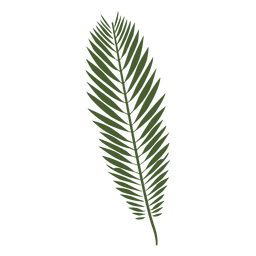 Majesty palm leaf illustration