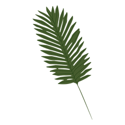 Palm leaf illustration