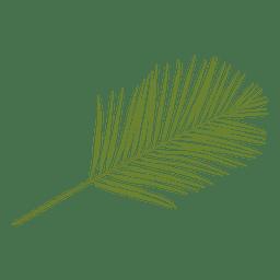 Ilustração da folha de palmeira de Phoenix