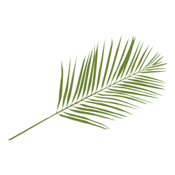 Phoenix palm leaf illustration