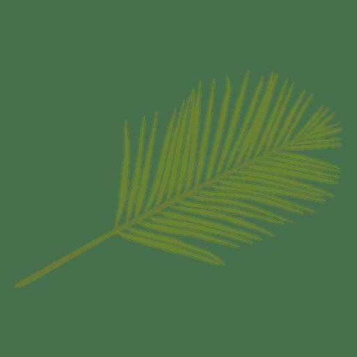 Ilustración de hoja de palma de Phoenix Transparent PNG