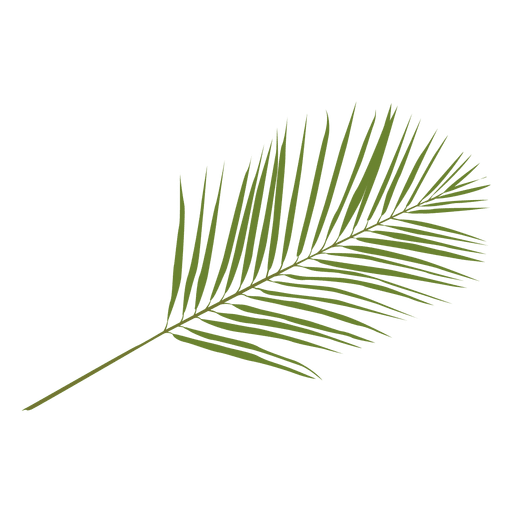 Phoenix palm leaf illustration Transparent PNG