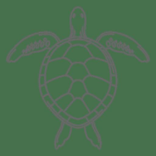 Línea de tortugas marinas