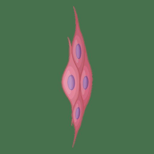 Ilustração da célula muscular lisa - Baixar PNG/SVG Transparente