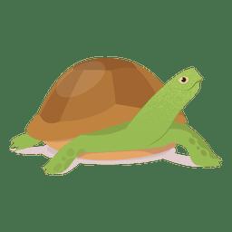 Ilustración de la tortuga