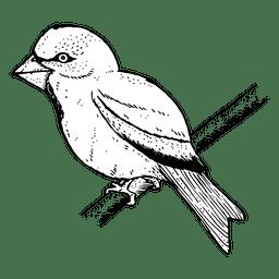 Boceto de pájaro