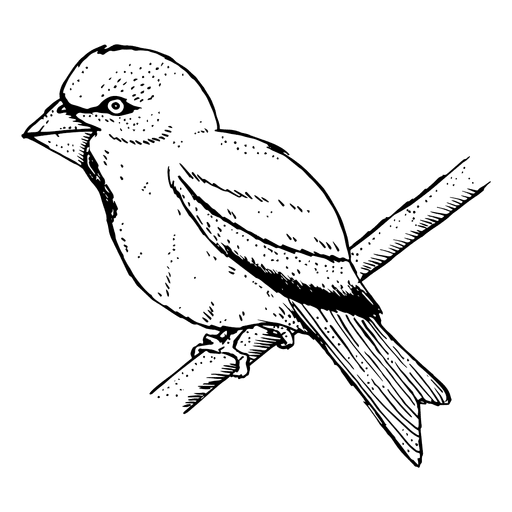 Boceto de pájaro Transparent PNG