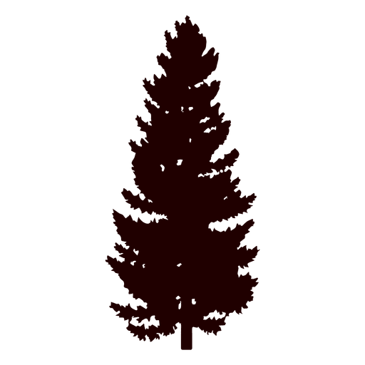 Austrian Pine Christmas Tree
