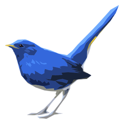 Blue redstart bird illustration