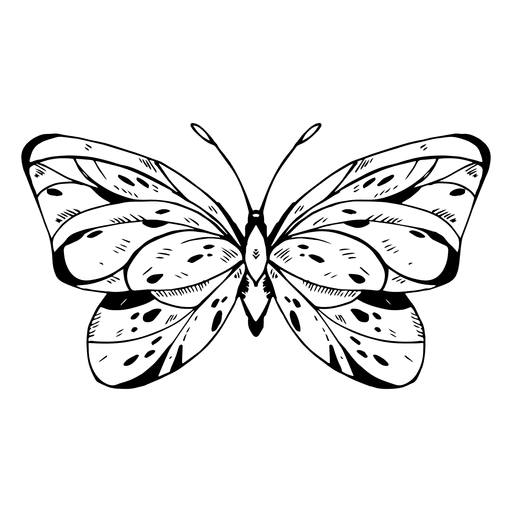 Butterfly drawing Transparent PNG
