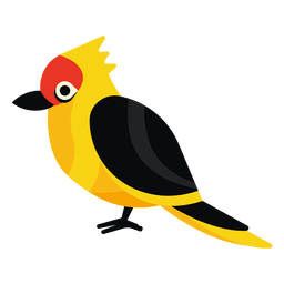 Exotic bird illustration