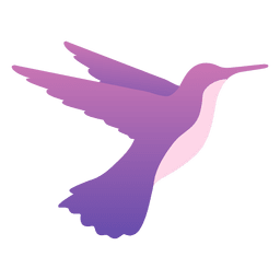 Alimentación colibrí