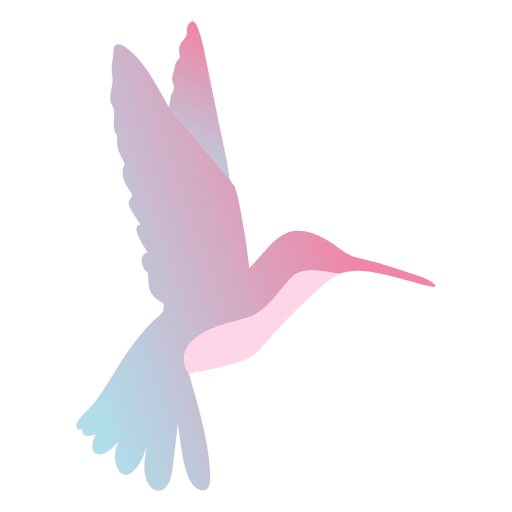 Colibrí flotando Transparent PNG