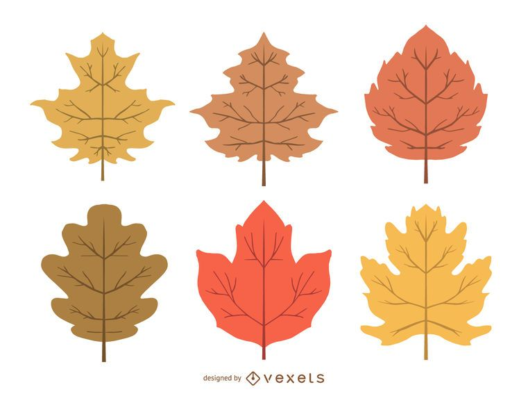 Delicate autumn leaves illustration set