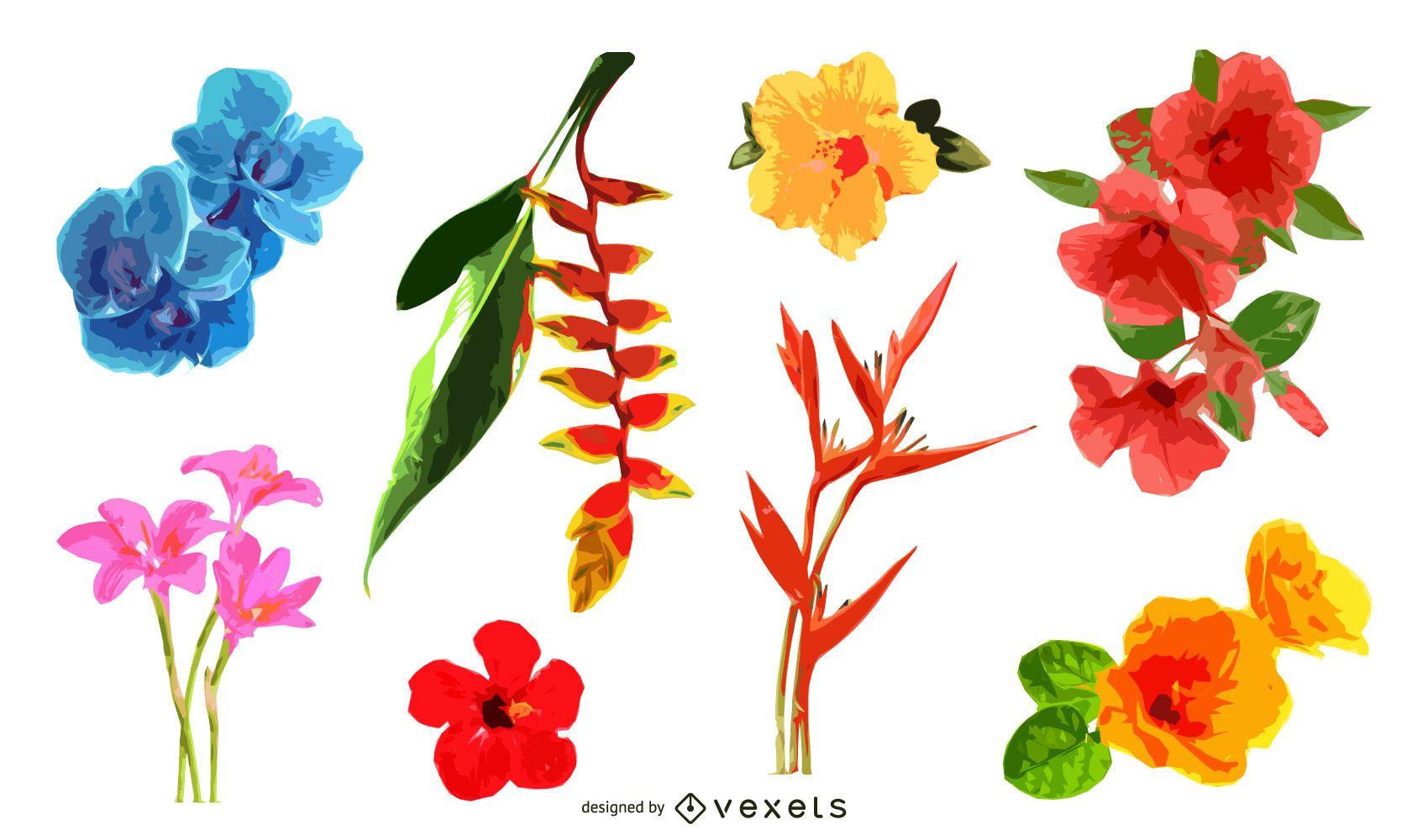 Tropical flowers illustration set