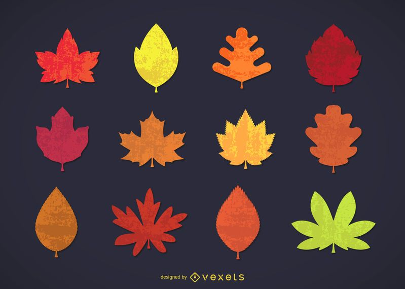 Collection of autumn leaves
