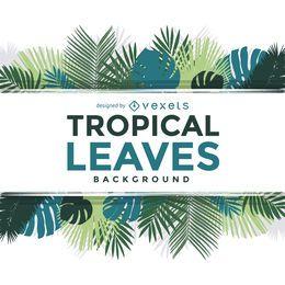 La palmera tropical deja el texto del marco sobre blanco