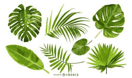 Conjunto de folhas de palmeiras isoladas