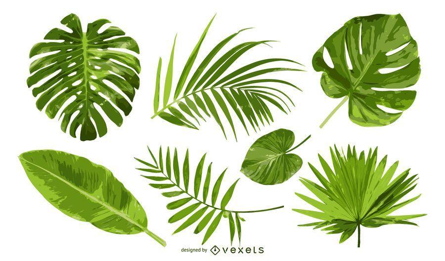 Conjunto de folhas de palmeira isolado