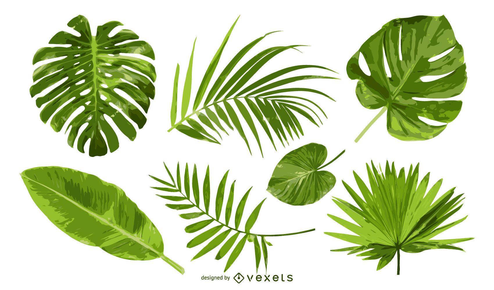 Conjunto de hojas de palmera aislado