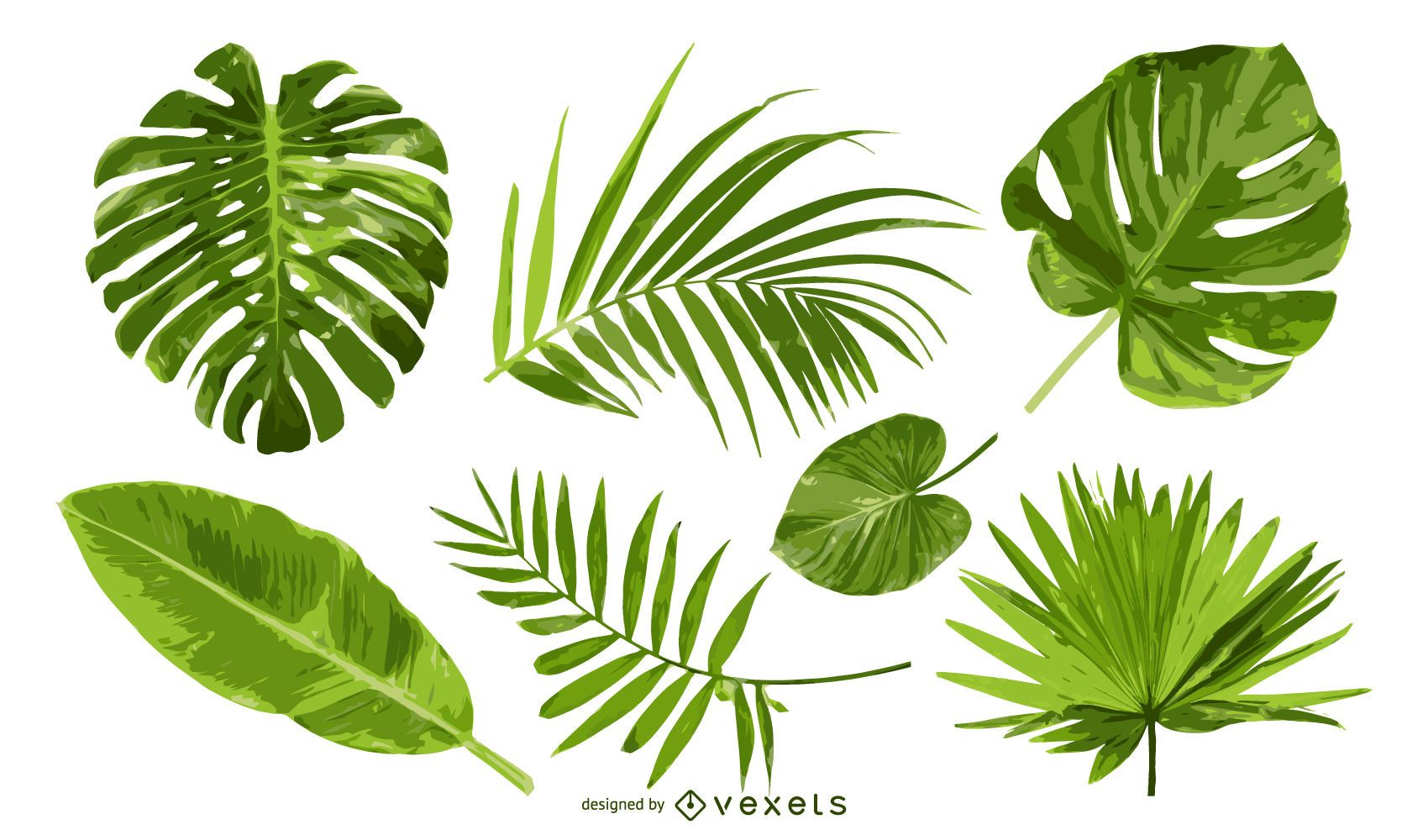 Isolated palm tree leaves set vector download - Plantas de hojas verdes ...