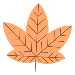 Orange autumn maple leaf
