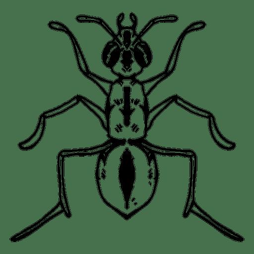 Ant stroke Transparent PNG