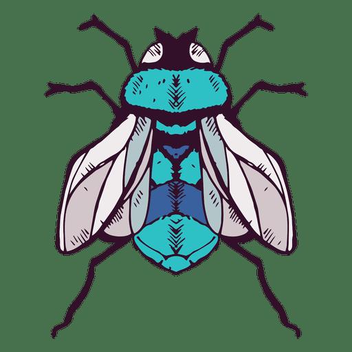 Fly illustration