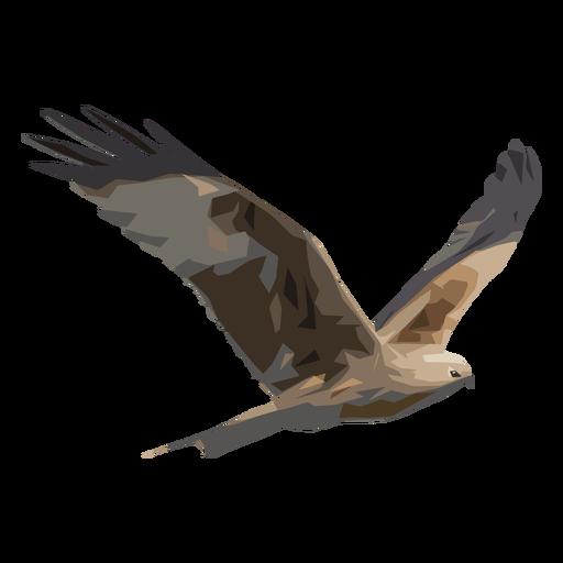 Falke Abbildung Transparent PNG