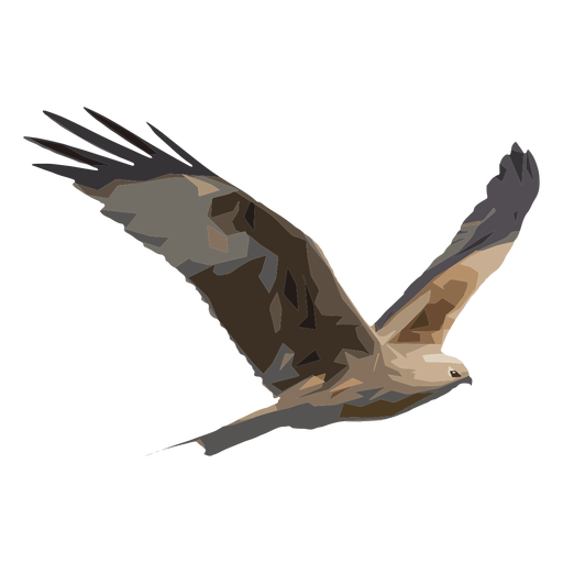 Ilustración de halcón Transparent PNG