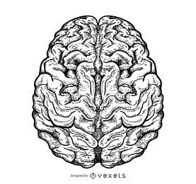 Ilustração cerebral isolada