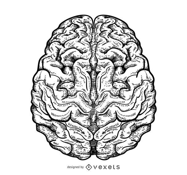 Isolated brain illustration